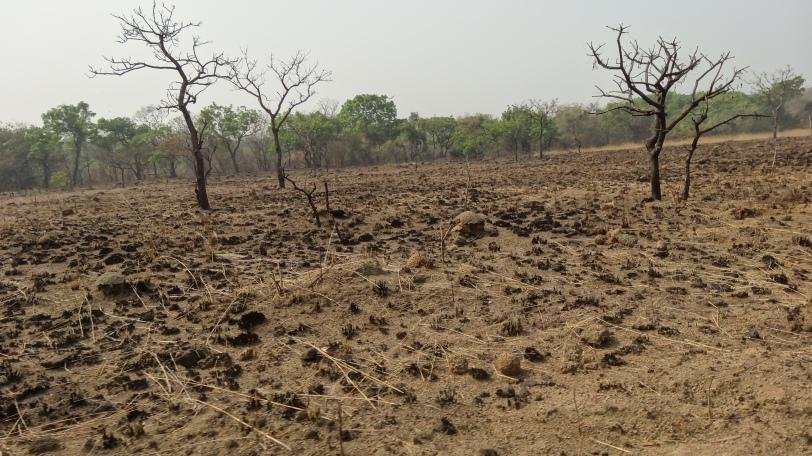Parque Nacional quemado