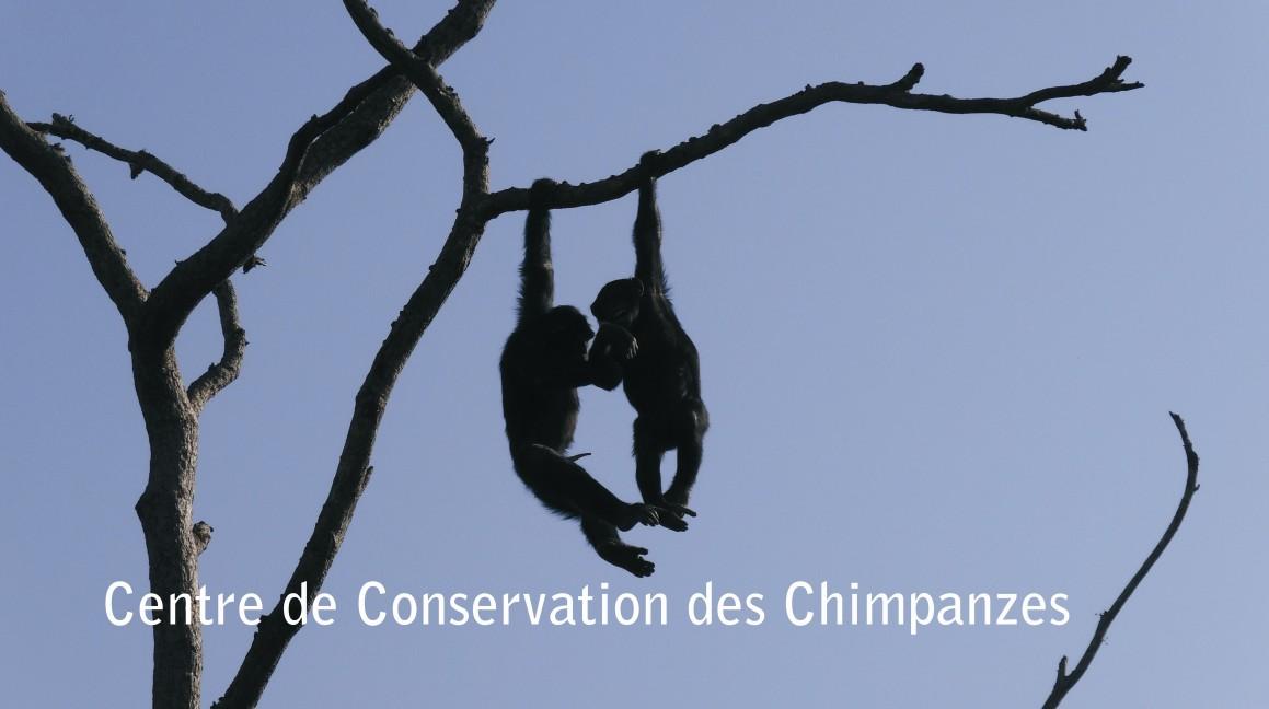 Demu (derecha) y Kirikou (izquierda) colgados de un árbol
