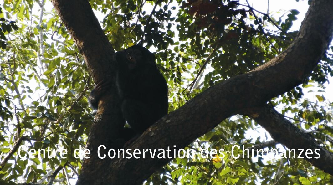 Tya subida a un árbol del bosque-selva